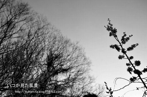 DS7_8513wi-ss.jpg