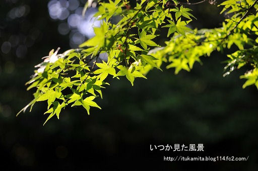 DS7_9598i-ss.jpg