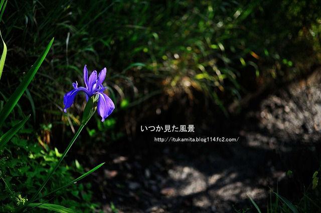 DS7_9646ri-s.jpg
