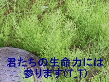 002_2014033012144553c.jpg