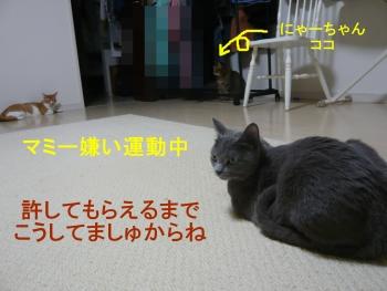 P1020827.jpg