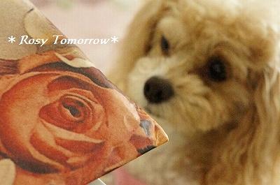 薔薇の包み紙ですよー