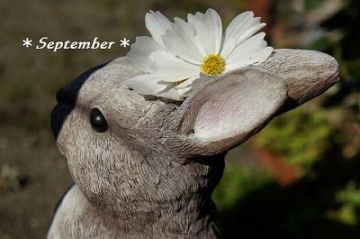 _9月うさぎ