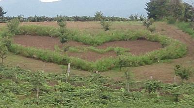 山本果樹園6
