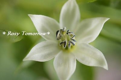 _夏野菜の花