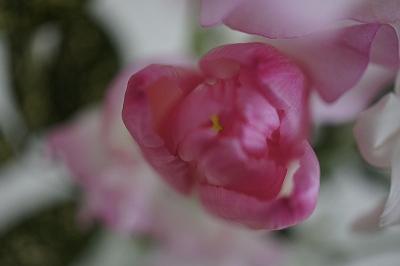 春のお彼岸2