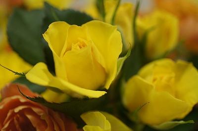 春色花束2