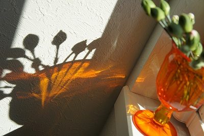 つぼみちゃんの影ーー