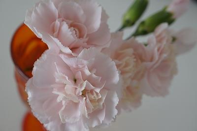 つぼみが咲いてくれたー