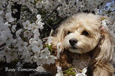 桜とイヴ2014 5
