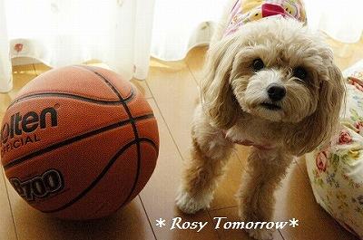 イヴもバスケ好きですよ