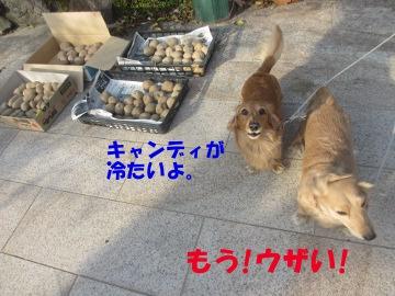ハリハリ漬けと甘酢漬け6
