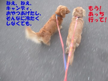 ハリハリ漬けと甘酢漬け7
