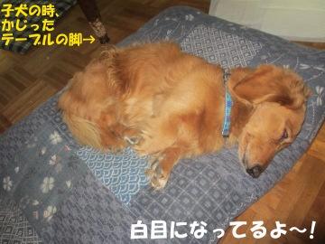 ハリハリ漬けと甘酢漬け8