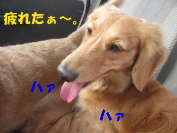バシッ!3