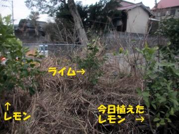 レモンほか5