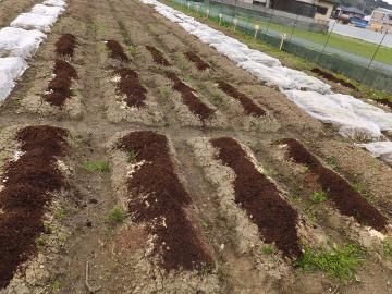 農園、肥料混ぜ