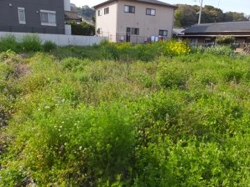 芋畑の草ぼうぼう