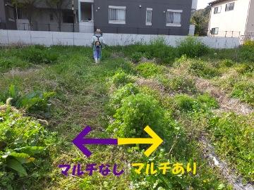 芋畑の草ぼうぼう2