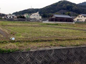 有機米苗と畦塗2