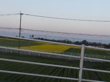 竹の子黄色2