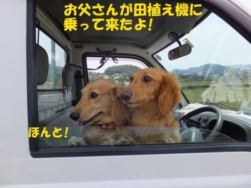 有機米田植えよ!3