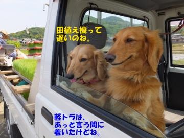 有機米田植えよ!4