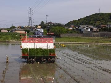 有機米田植えよ!11