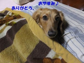 毛布をかけて2