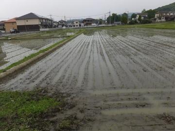 田植え、玉ねぎ、ニンニク収穫
