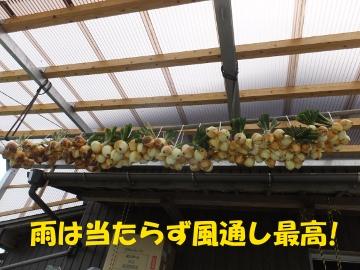田植え、玉ねぎ、ニンニク収穫6