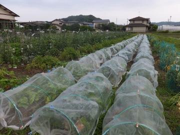 野菜が成長7