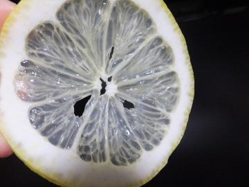 レモンを切った3
