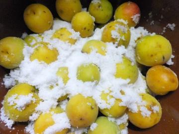 梅が黄色7