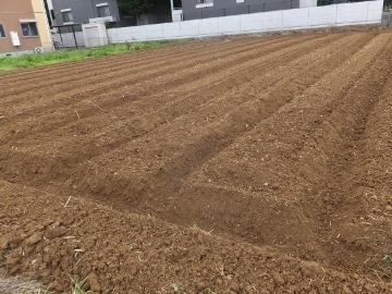 芋畑準備と苗植え