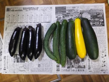 芋畑準備と苗植え12