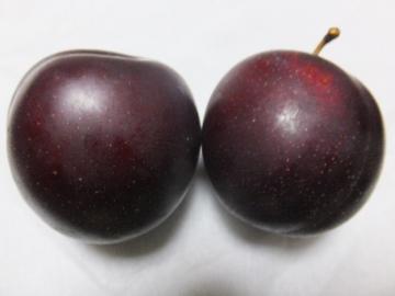 スモモ真っ赤な実がいっぱいに6