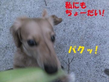 食べたいの?2