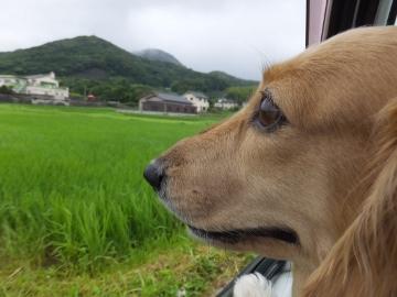 台風の後3