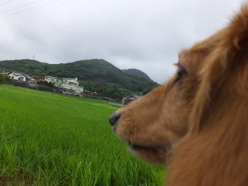 台風の後4