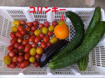 トマトにカナブン3