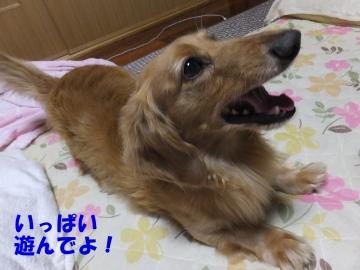 小倉祇園太鼓10