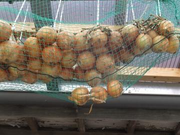 玉ねぎとネット2