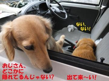 軽トラに避難?8