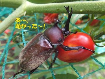えこひいき?5