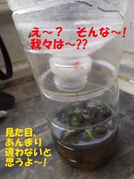 えこひいき?6