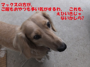 えこひいき?8