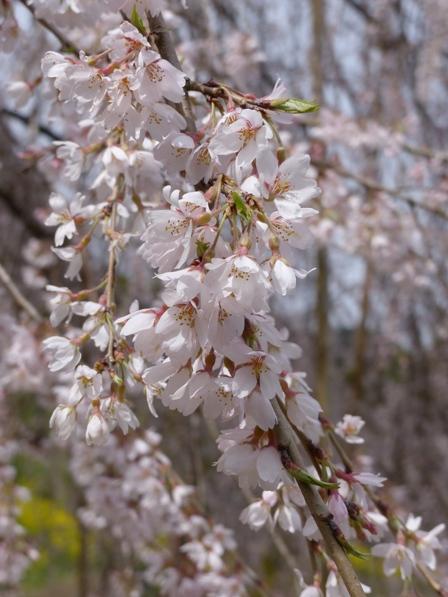 相野の花 7