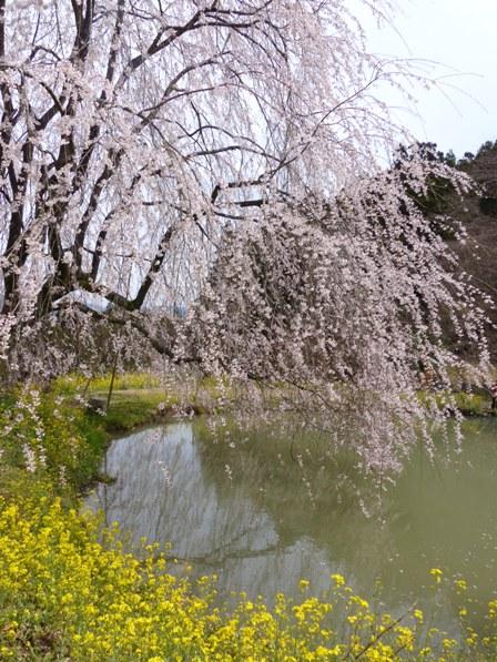 相野の花 3