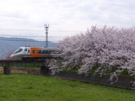河野川沿いの桜 & JR四国8000系特急電車